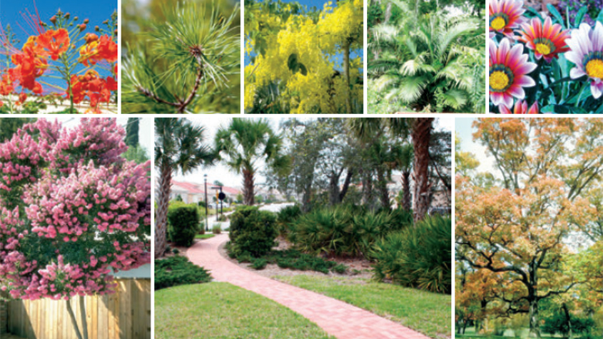 Florida Friendly Landscaping - Legally Speaking - Hillsborough County - Florida Friendly Landscaping - Legally Speaking
