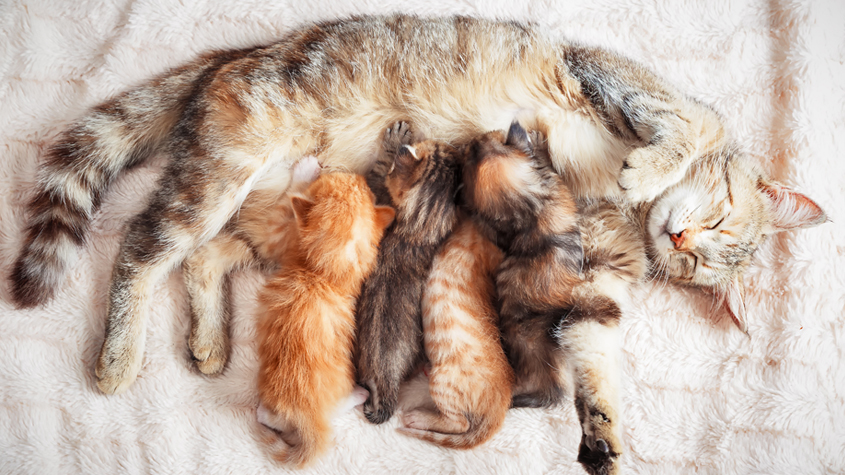 Kittens with mother