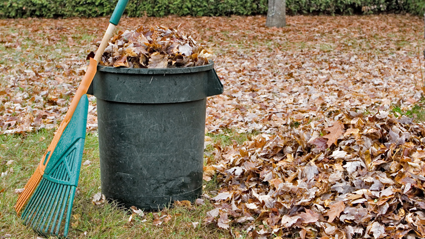 Trash can of leaves