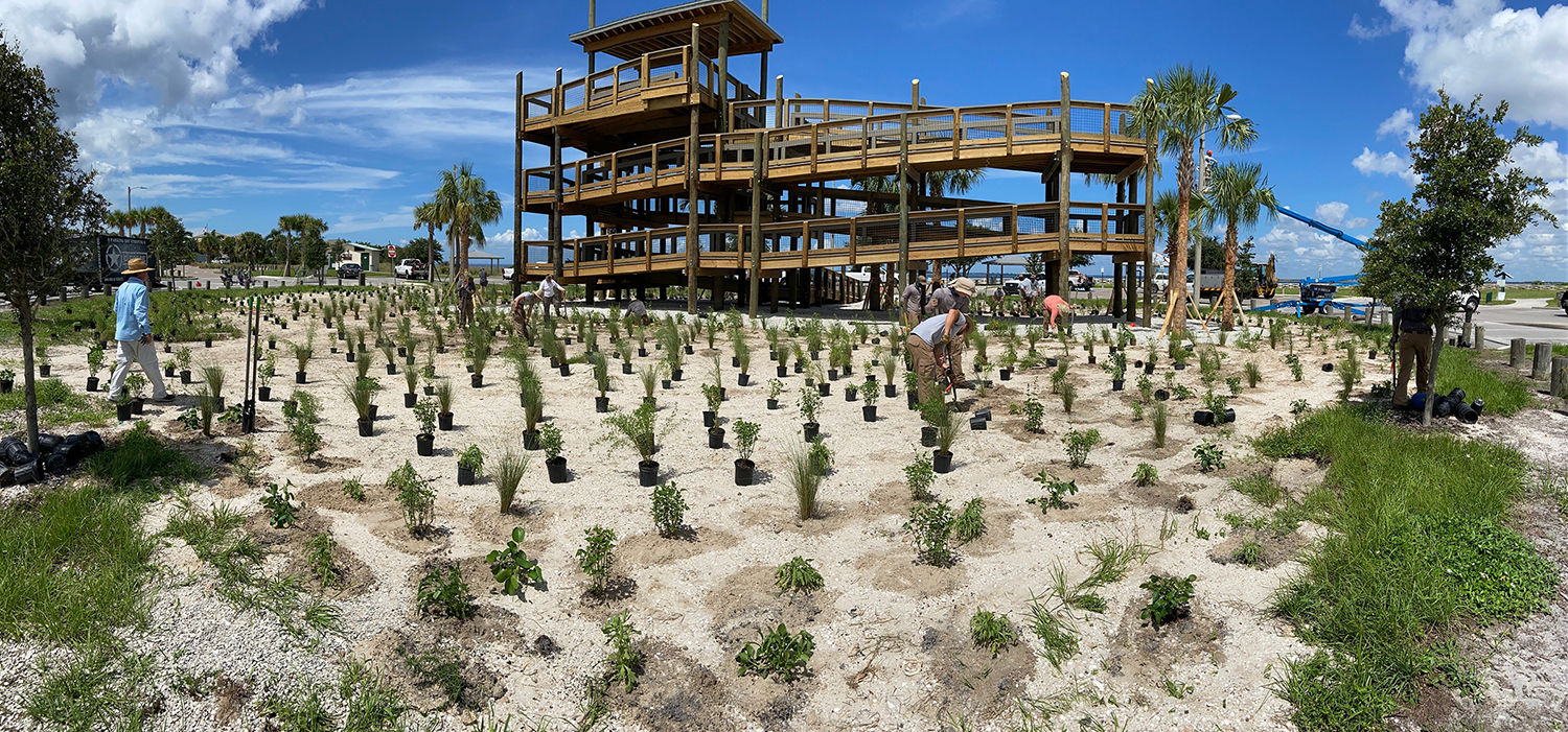 People planting plants around the Apollo Beach wheelchair accessible observation tower as the project nears completion