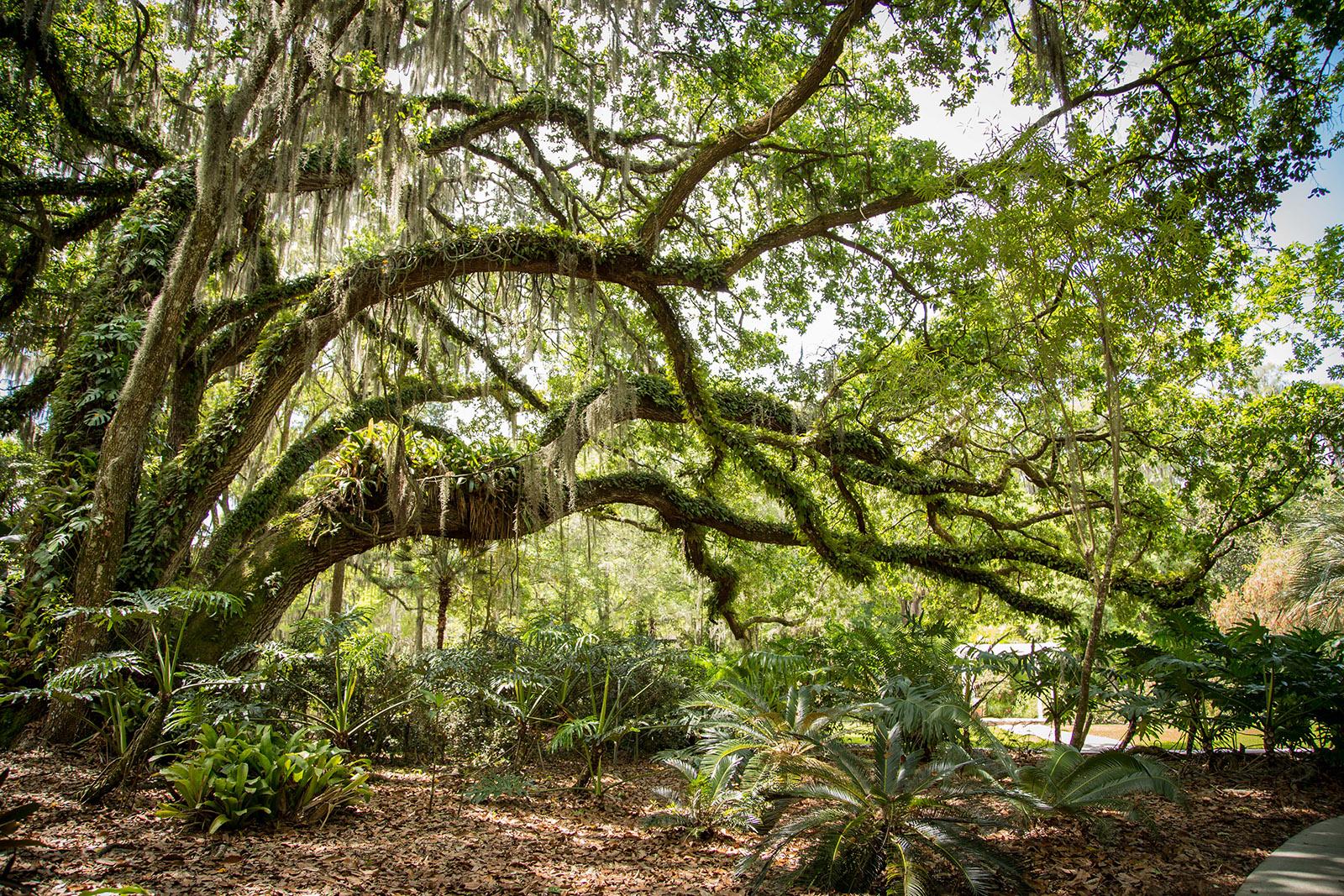 Hillsborough county eureka springs conservation park - Independence rv winter garden florida ...