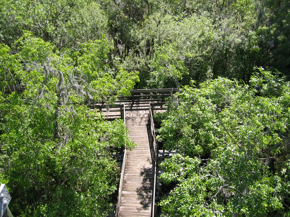 Boardwalk from above
