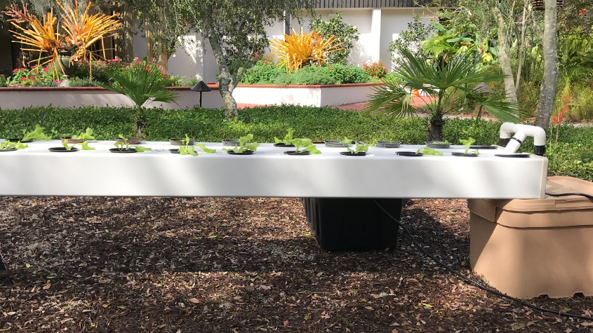 how does your garden grow get the dirt on hydroponics - Garden Dirt