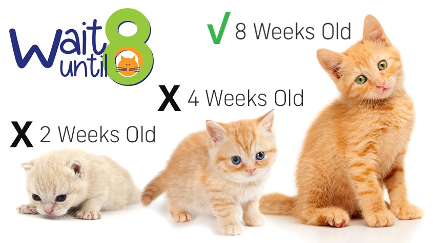 Hillsborough County Dos And Donts Of Kitten Season