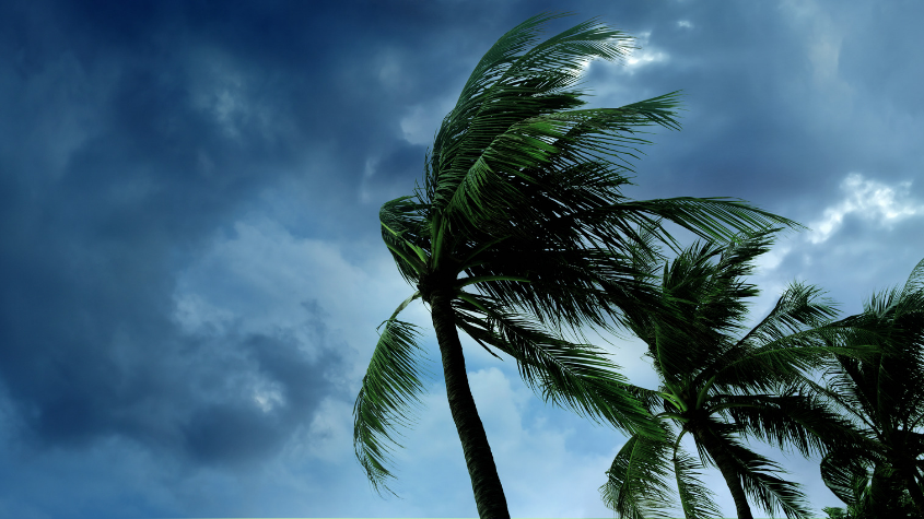 Palms in the storm