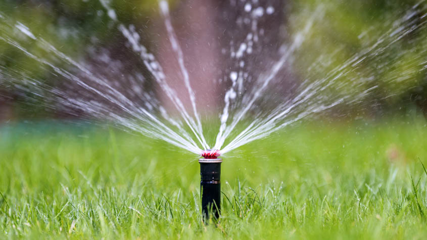 Watering restrictions